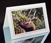 Heavy card stock stylish 5x7 cards with envelopes